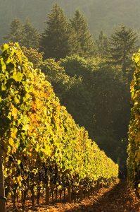 1859_Oregon_Wine_Grapes
