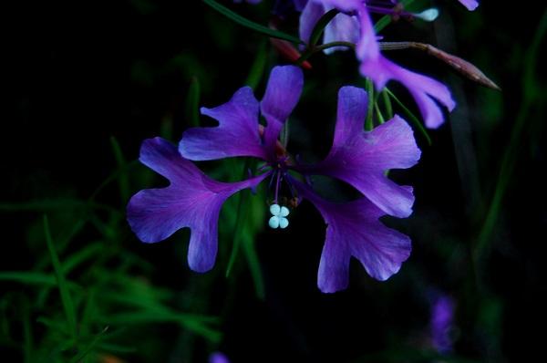 1859_wildflowers_stephanie_hinson_4