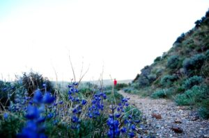 1859_wildflowers_stephanie_hinson_7