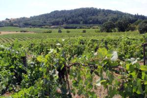 Yamhill-Valley-Vineyard-too