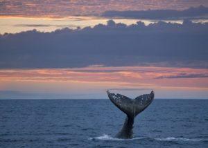 oregon_coast_whale_migration
