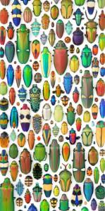 2010-Autumn-Oregon-Art-Artist-Willamette-Valley-Salem-Christopher-Marley-bug-insect-mosaic-2