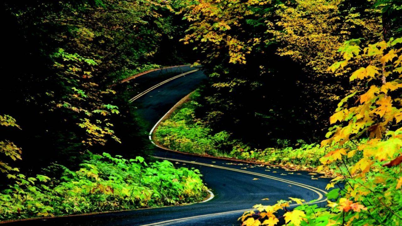 2010-Autumn-Oregon-Travel-Road-Trip-Willamette-Valley-McKenzie-River-Highway-126