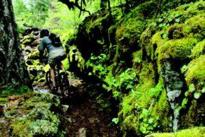2010-Autumn-Oregon-Travel-Road-Trip-Willamette-Valley-McKenzie-River-Trail-bike-hike