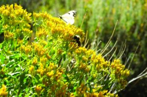 2011-Autumn-Eastern-Oregon-Hike-Outdoors-The-Steens-bees