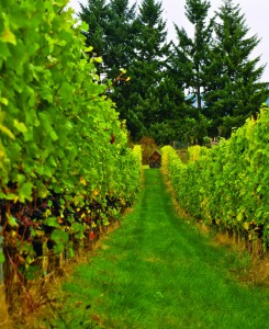 2011-Autumn-Oregon-Bounty-Willamette-Valley-Wandering-Aengus-Cider-Orchard