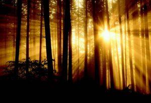 2011-Winter-Oregon-Travel-Eugene-Spencer-Butte-Park-sun-rays