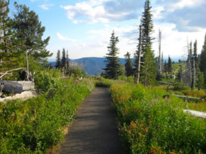 2013-July-August-Oregon-Travel-Explore-Michael-Oliver-Path-in-Forest