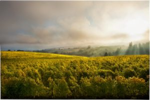 Ponzis_Aurora_Vineyard_Polara_Studio