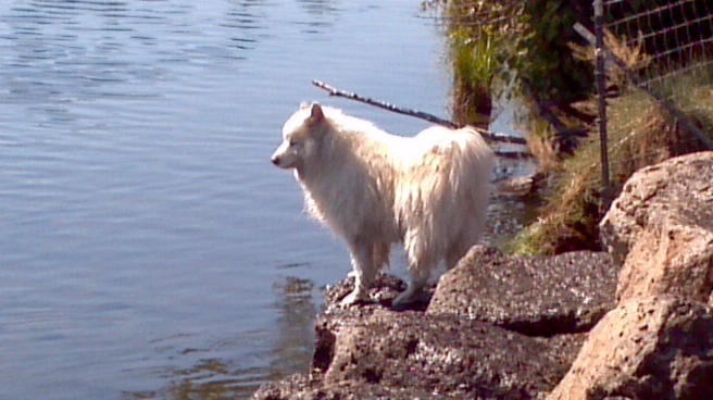todd-mccullough-chilly-at-deschutes-samoyed
