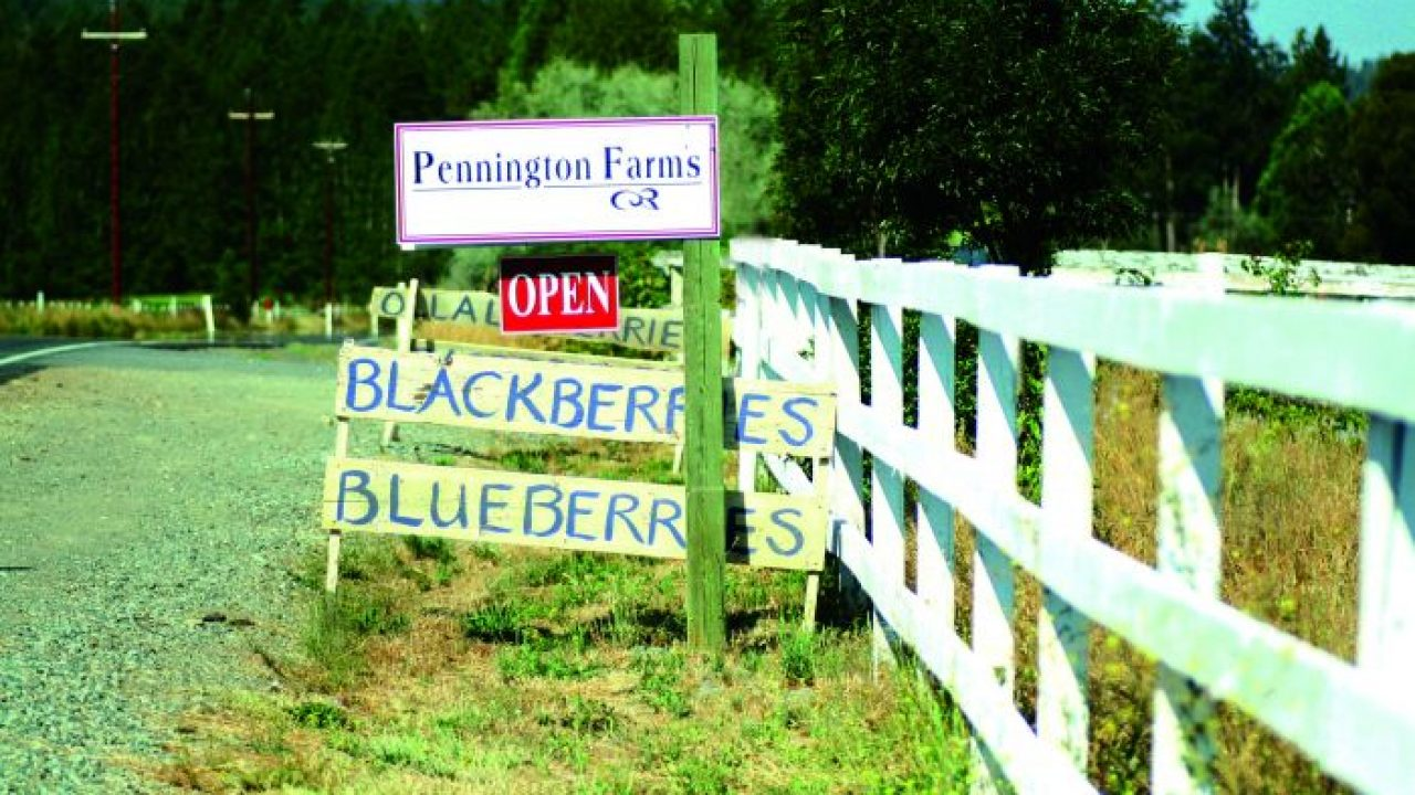 2012-july-august-1859-southern-oregon-farm-to-table-blackberries-grants-pass-pennington-farms-sign
