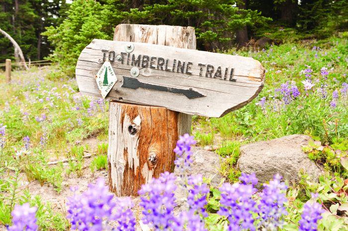 2012-july-august-oregon-columbia-river-gorge-mt-hood-72-hours-in-mt-hood-territory-timberline-trail