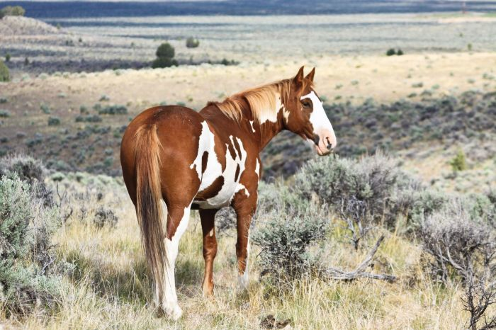 2012-september-october-1859-eastern-oregon-steens-mountains-gallery-wild-mustangs-plains-and-horse