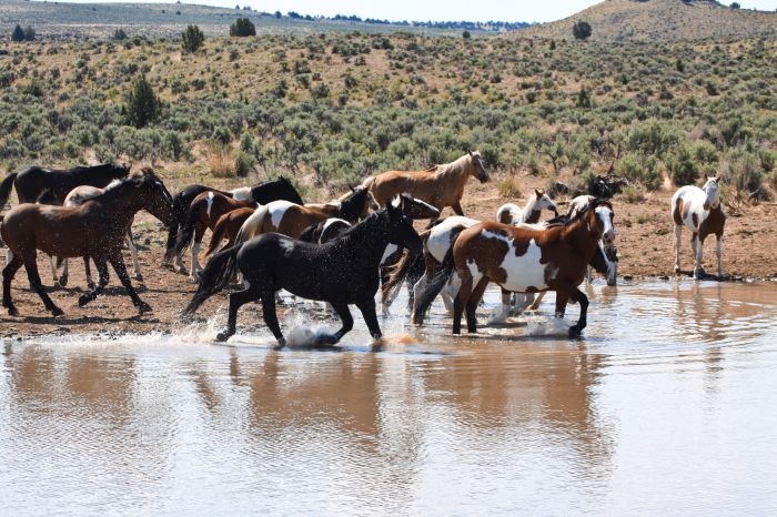 What does an essay on wild horses contain?