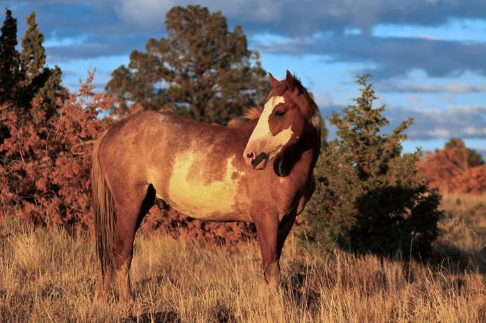 2012-september-october-1859-eastern-oregon-steens-mountains-gallery-wild-mustangs-sunset-horse