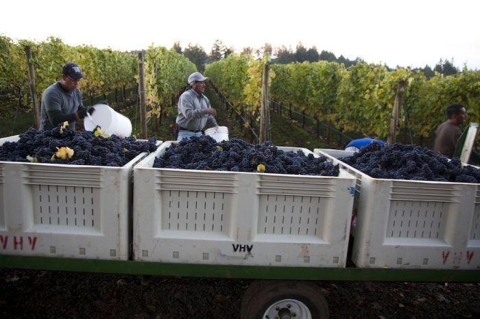 2012-september-october-1859-magazine-willamette-valley-oregon-wine-crush-harvesting-grapes