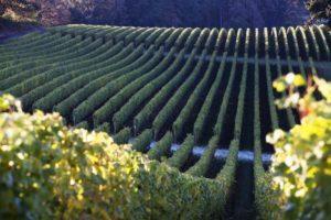 2012-september-october-1859-magazine-willamette-valley-oregon-wine-crush-vineyard