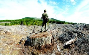 2012-september-october-1859-oregon-coast-salmon-river-headwaters-to-sea-clear-cut-woods