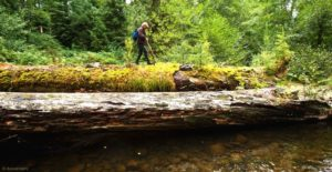 2012-september-october-1859-oregon-coast-salmon-river-headwaters-to-sea-fallen-tree-in-river