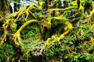 2012-september-october-1859-oregon-coast-salmon-river-headwaters-to-sea-rain-forest