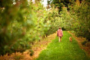 2012-september-october-1859-oregon-hood-river-farm-to-table-jennifer-euwer-dog-molly-valley-crest-orchads