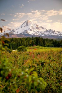 2012-september-october-1859-oregon-hood-river-farm-to-table-mount-hood-from-valley-crest