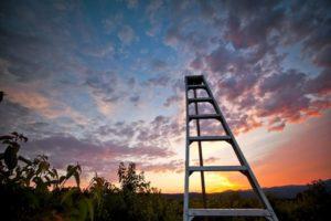 2012-september-october-1859-oregon-hood-river-farm-to-table-pear-picker-ladder
