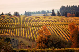 event_post__Wine-Country-Thanksgiving_1445359418_1