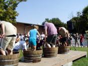 jackson-county-harvest-fair-and-micro-brew-festival