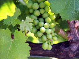 southern-oregon-winery-association-wine-1859-savor