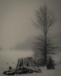 1859-oregons-birthday-photo-contest-gorge-mt-hood-clear-lake-mt-hood-Brandon-waller