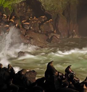 2009-Summer-Oregon-Coast-Travel-Florence-sea-lion-caves