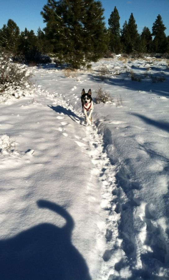 2012-december-1859-central-oregon-bend-outdoor-blog-Guinness-sled-dog