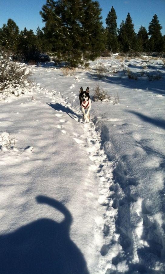 2012-december-1859-central-oregon-bend-outdoor-blog-Guinness-sled-dog