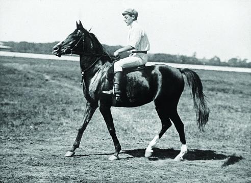 2012-Spring-Oregon-History-Cartoonist-Homer-Davenport-Abeyeh-imported-Arabian-mare-horse