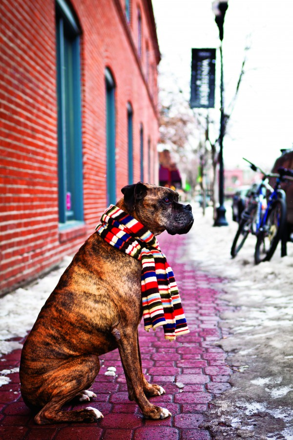 2012-Winter-Central-Oregon-Travel-Bend-downtown-dog-with-scarf