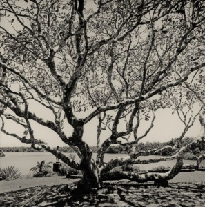 2012-summer-1859-willamette-valley-eugene-oregon-what-im-working-on-russel-wong-photographer-frangipani-tree