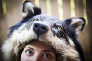 2013-July-August-Oregon-Travel-Explore-Clackamas-and-Oregon-Fairs-Leah-Nash-Wolf-Hat