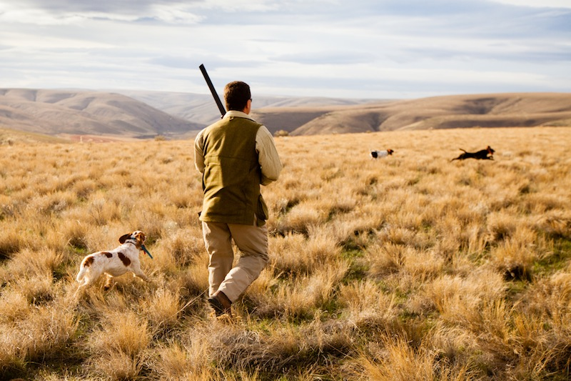 2013-january-february-1859-magazine-gorge-mt-hood-oregon-the-dalles-outdoor-adventures-upland-bird-hunt-kevin-schaffer-german-shorthaired-pointers