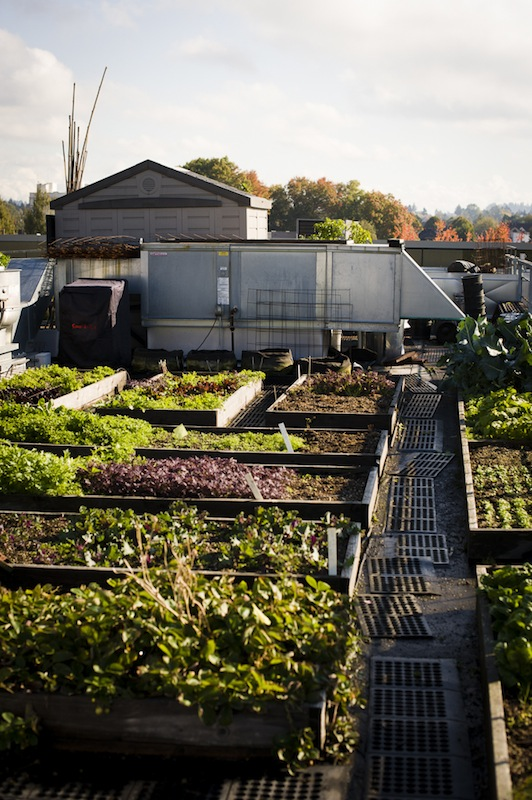 2013-january-february-1859-magazine-portland-oregon-farm-to-table-roof-top-garden-noble-rot-leather-storrs-garden
