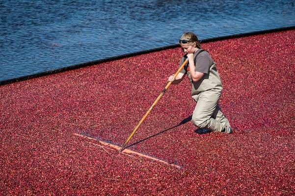 Cranberries-1284