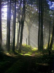 1859-oregons-birthday-photo-contest-oregon-coast-nesika-beach-forest-bruce-grieve