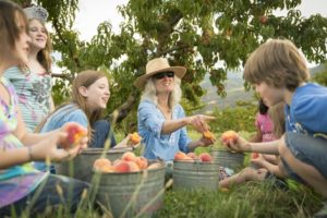 1859_July_August_Jared_Cruce_Valley_View_Peaches_15