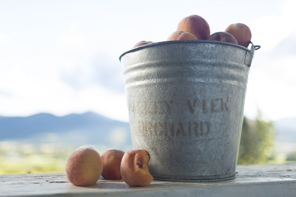 1859_July_August_Jared_Cruce_Valley_View_Peaches_4