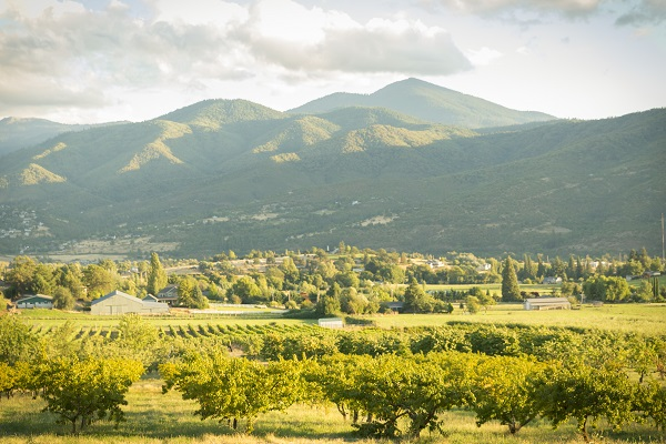 1859_July_August_Jared_Cruce_Valley_View_Peaches_6