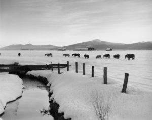 2012-november-december-1859-magazine-oregon-winter-ray-atkeson-gallery-homeward-bound-horses-in-snow-klamath-falls