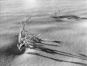 2012-november-december-1859-magazine-oregon-winter-ray-atkeson-gallery-snow-patterns
