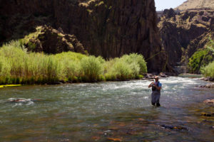 2013-July-August-Oregon-Fish-Oregon-Rivers-Tyler-Roemer-Fly-Fishing-Front-View-Grassy-Bank-Standing-in-Water