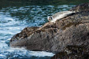 2013-march-april-1859-magazine-oregon-coast-72-hours-newport-harbor-seal-yaquina-head