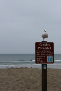 2013-may-june-1859-magazine-oregon-coast-surfing-seagull